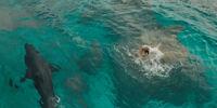 Gallery-1466777229-the-shallows-shark-blake-lively.jpg white shark