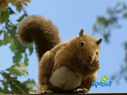 Squirrel (Barney and Friends)