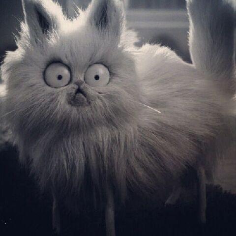 File:Mr Whiskers.jpg