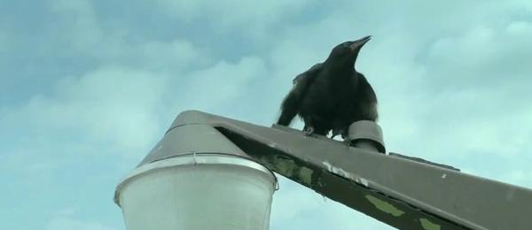 File:The Foulmouthed Crow.jpg