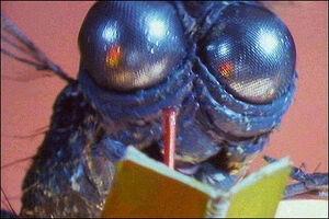 F.W. Fly