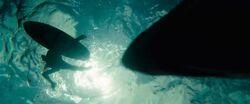 SharkShallows