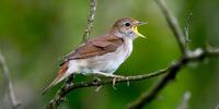 Nightingale (Wemi song)