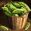 Balsam Pear - Icon (Big)