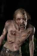 Old walker (travis) 2