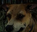 Sam (Animal)