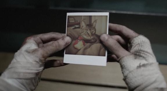 File:Walking dead walking cat 2.jpg