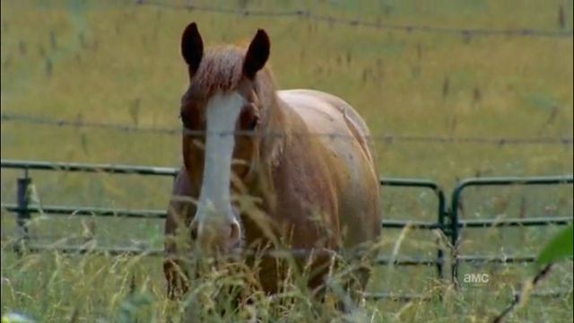 File:Horse1.png