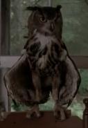 Owl 2x01