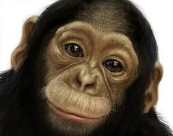 File:Monkey Ivan Profile.jpeg