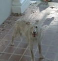 File:117px-Walking dead 1 eyed dog.png