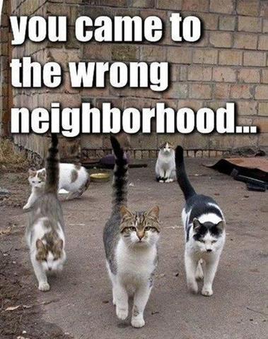 File:Wrong neighborhood.png