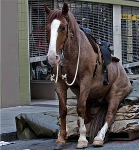 File:Rick's Horse.jpg