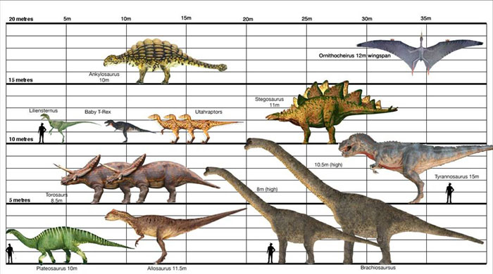 Image - Dino-Size-Chart.jpg | Walking With Wikis | Fandom powered ...