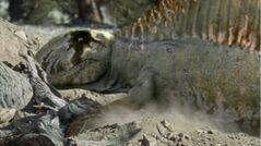 Dimetrodon digs