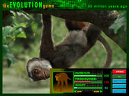 Evolutiongame ad apidium