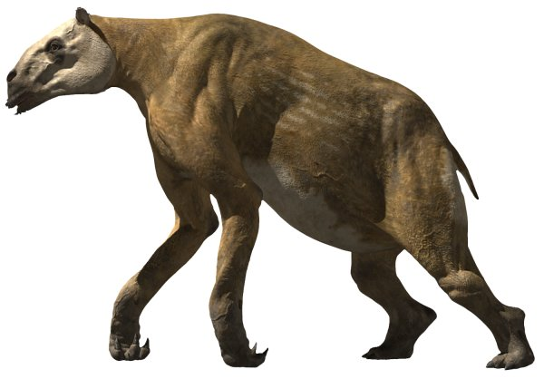 Chalicotherium | Walking With Wikis | FANDOM powered by Wikia