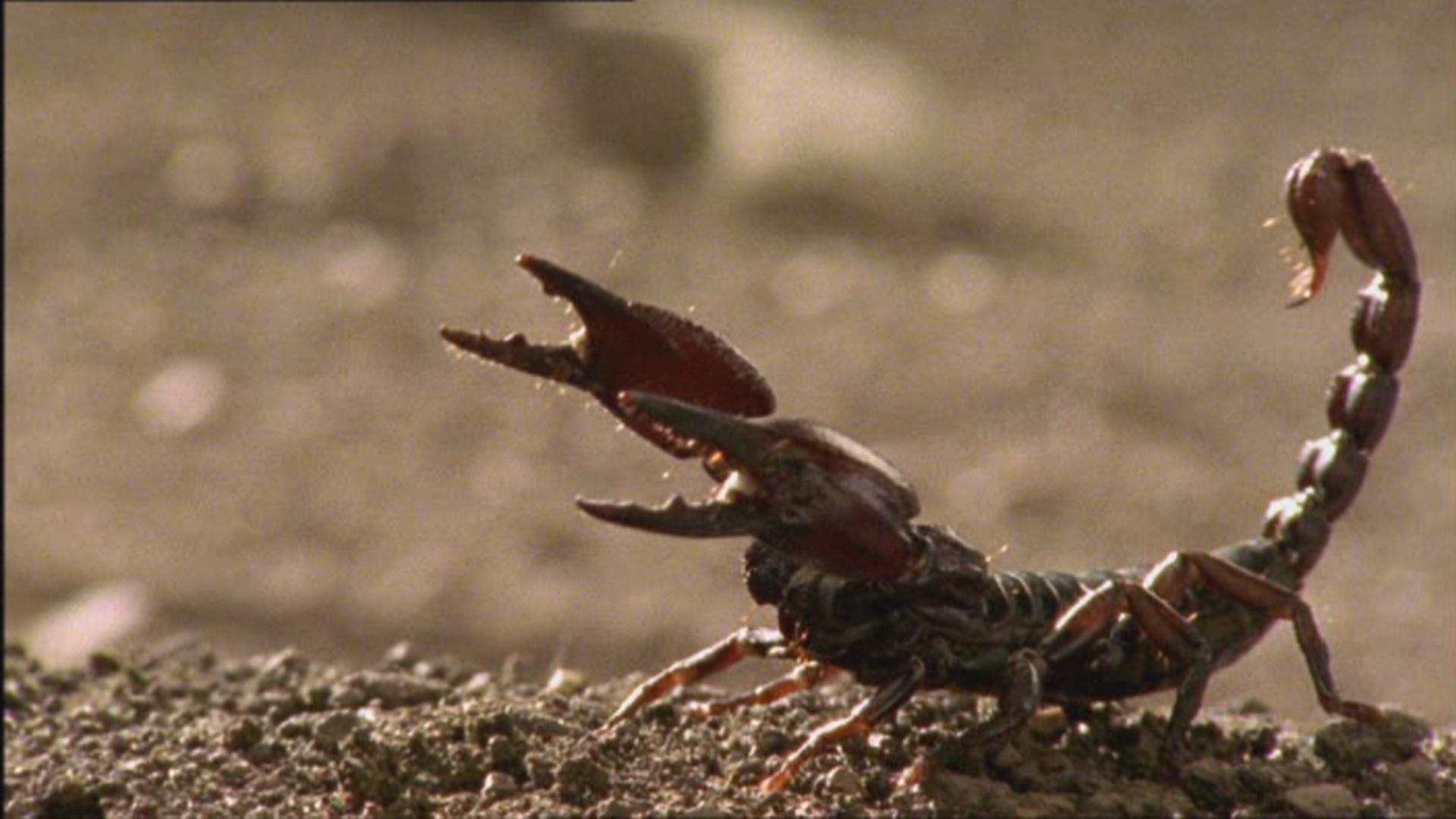 BA Scorpion  Scorpion