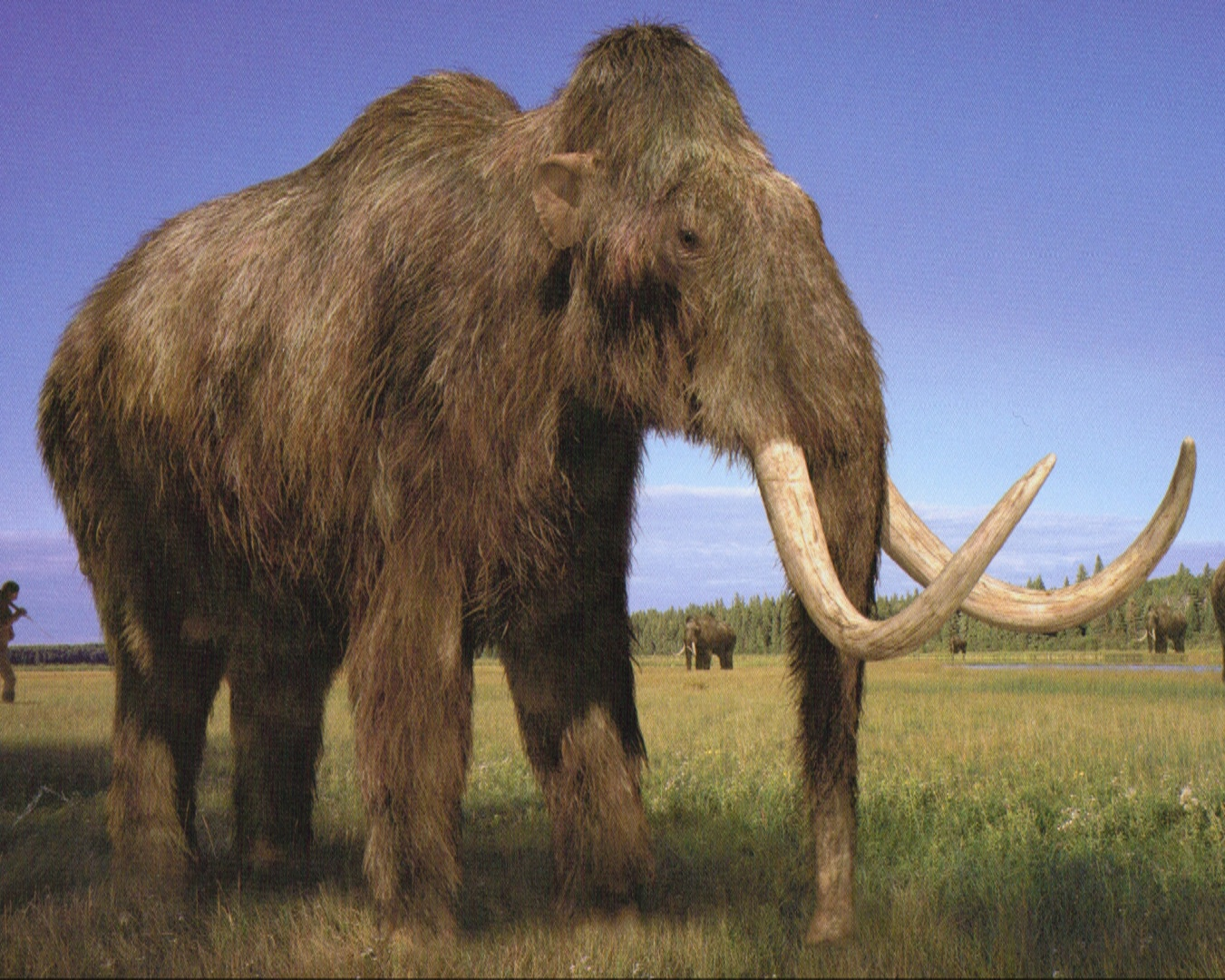 Woolly Mammoth | Walking With Wikis - 608.9KB