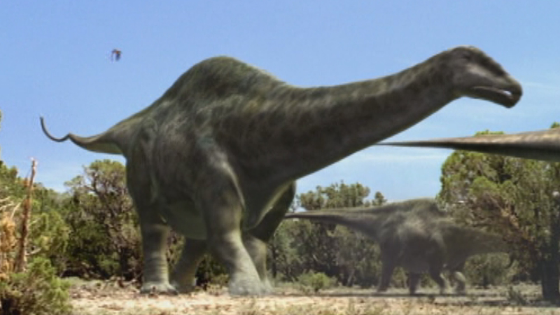 Apatosaurus walking with wikis fandom powered by wikia - Dinosaure diplodocus ...