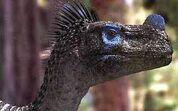 Ornitholestescloseup
