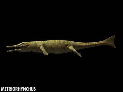 Metriorhynchus closeup