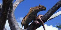 Dinofelis