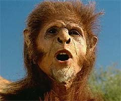 File:Homo habilis img1.jpg