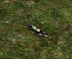 Sniper in Prone Position