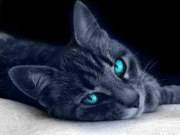 Sapphire Real Life Image