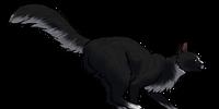 Obsidianhawk