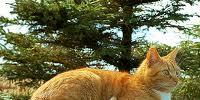 Gingerpaw (SprC)