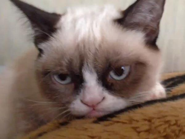 File:Grumpy-cat-600.jpg