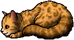 Leopardstar.kit