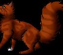 Squirrelflight