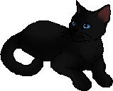 moon shadow warrior cats