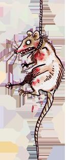Datei:Deadpossum.png