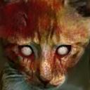 Pi-cat 00
