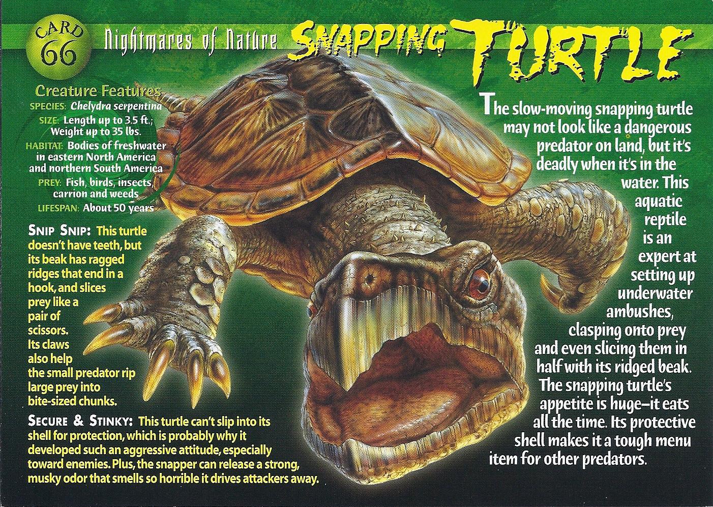 Snapping Turtle Wierd N Wild Creatures Wiki Fandom