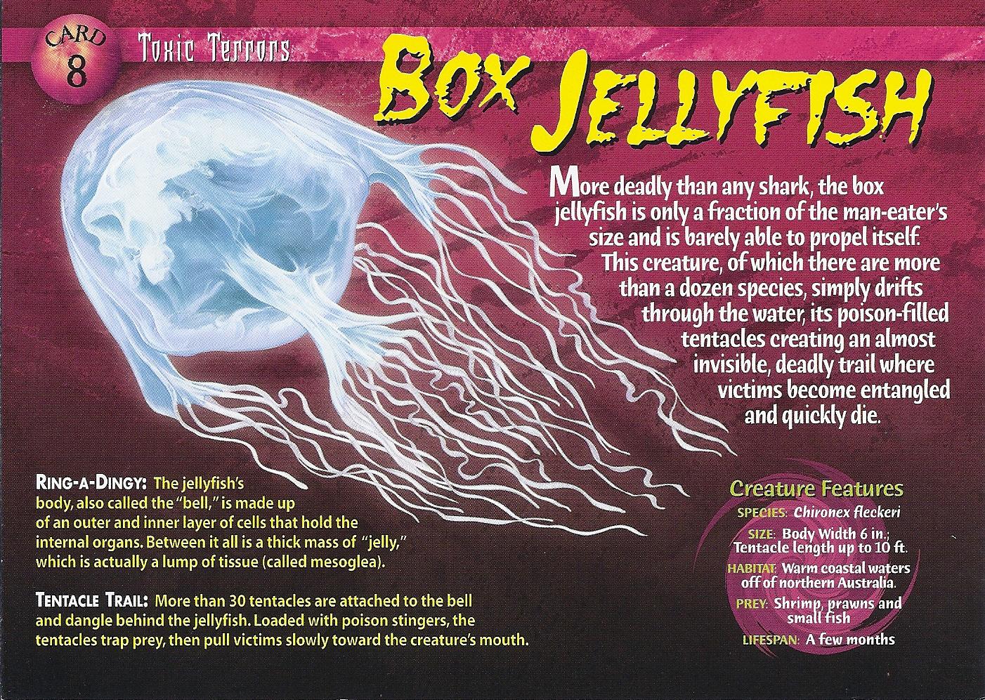 Box Jellyfish Wierd N Wild Creatures Wiki Fandom