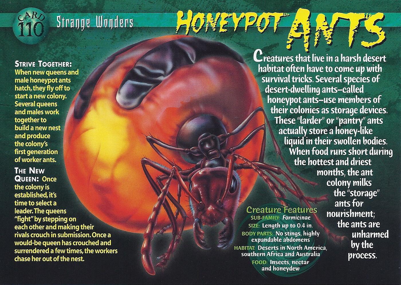 honeypot ants wierd n wild creatures wiki fandom