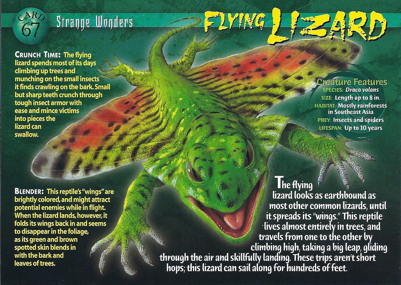 Flying Lizard Wierd N Wild Creatures Wiki Fandom
