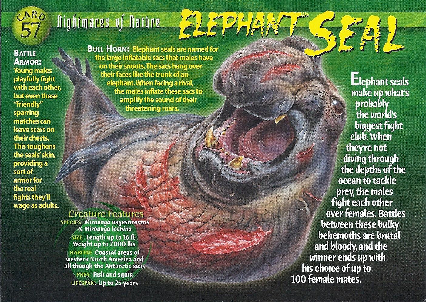 Elephant Seal Wierd N Wild Creatures Wiki Fandom