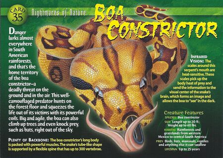 Boa Constrictor Marvel Front Boa Constrictor Front
