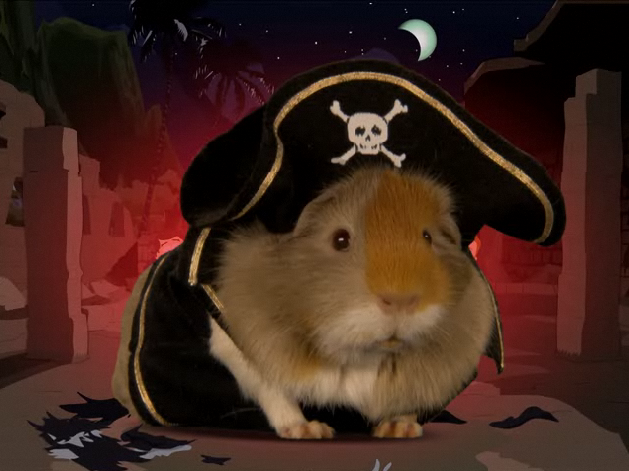 File:GuineaPirate.png