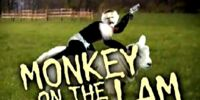 Monkey On The Lam!