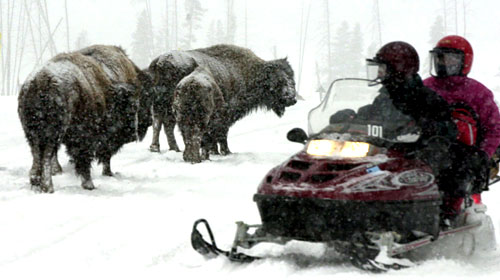 File:YellowstoneBisonSnowmobile.jpg
