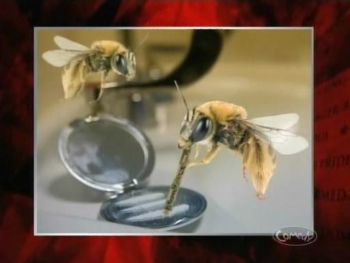 File:Bees and cocaine.JPG