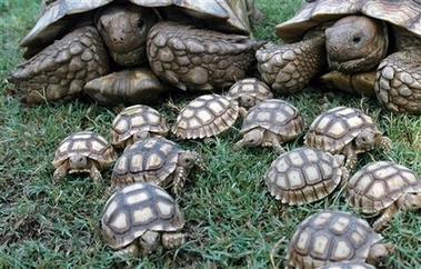 File:TurtlesAndTurtleBabies.jpg
