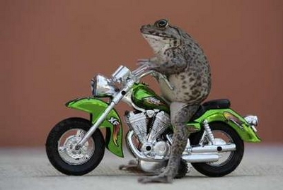 File:FrogToyMotorcycle.jpg